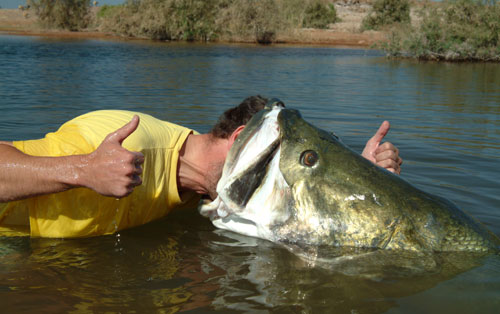 nile perch You try to find a fishing trips, a fishing charters or a day of fishing to try to catch a nile perch with a fishing guide, don't hesitate to make an online booking .